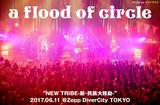 a flood of circleのライヴ・レポート公開。新サポート・ギター初参加のワンマン・ツアー最終日、挑発的セトリで熱狂させたZepp DiverCity TOKYO公演をレポート